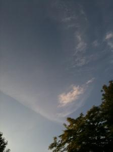 blue sky try fluffy cloud