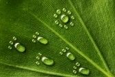 6991617-beautiful-water-footprint-drops-on-a-leaf-close-up[1]