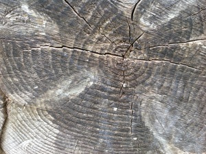 Age rings of a tree trunk