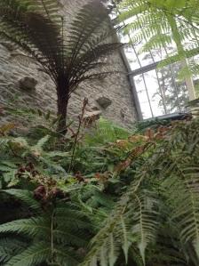 Inside Fernery