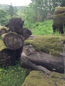 Mossy logs
