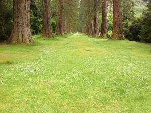 Redwood lawn