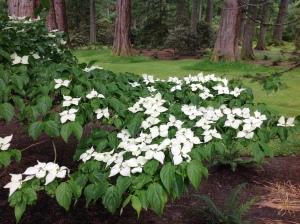 Spray of white flowers