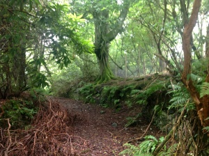 What's left of Logan Ladies Walk.  There are cobbles under the deep leaf litter.