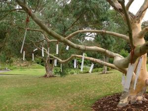 Fri 30Aug last Poet Tree 1