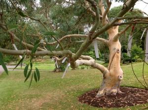 Fri 30Aug last Poet Tree2