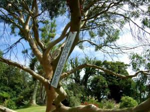 Poety tree