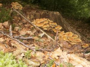 Gerry 3 treestump fungi