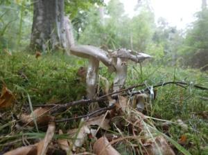 Gerry 5 skinny fungi